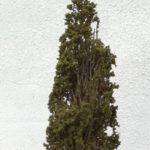 alberi di cipresso per diorama plaastico