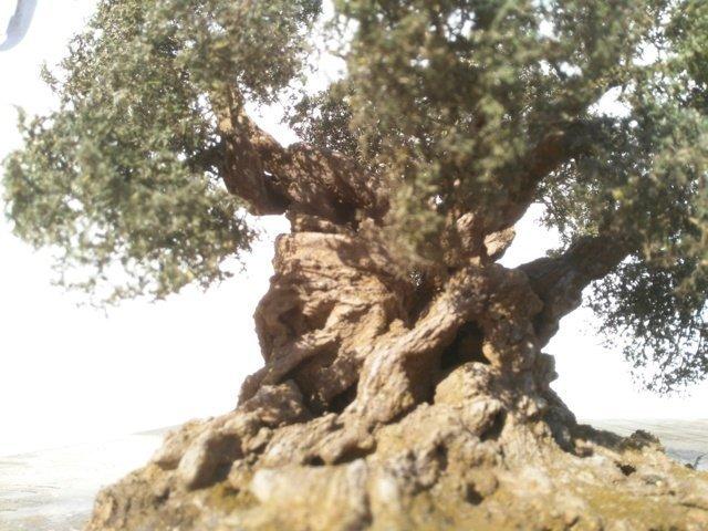 albero di ulivo per presepe
