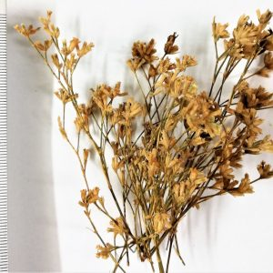 Fiorellini Particolare per Presepi e Diorami