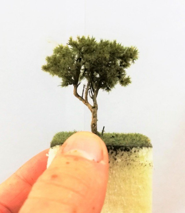 Albero di pino Marittimo presepe diorama 6 cm