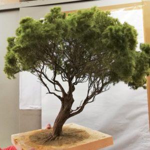 Albero di pino Marittimo presepe diorama 60 cm