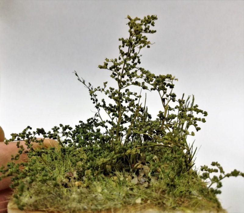 bush busted farmer cespuglio mini Verde Scuro MINIPACK