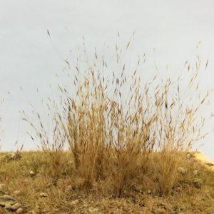 High Grass / Low Effect, Miniature Grasses