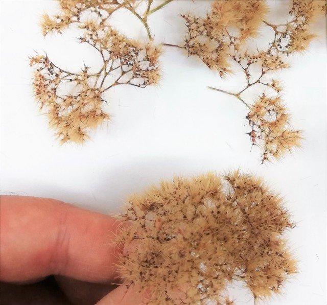 Dark Beige Professional Mini bushes new formula