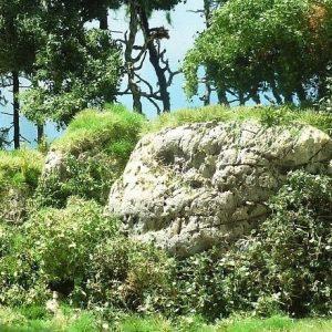 fioritura gialla Tappetino da tagliare per arbusti,siepi o cespugli 250-46
