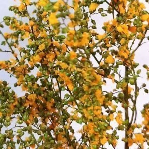 Light Green stabilized leafy bush with orange flowers MINIPACK