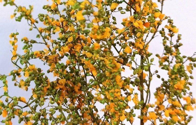 Light Green stabilized leafy bush with orange flowers MINIPACK