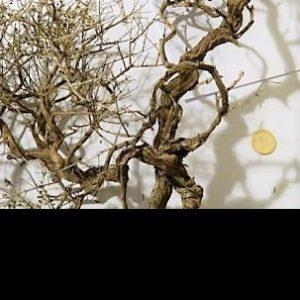 Natürliche oder geflochtene Eisenbäume und Äste