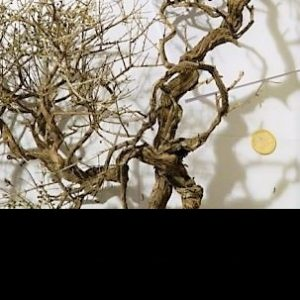 Arbres et branches naturel ou en fer tressé
