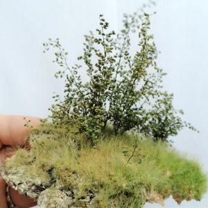Effet plantes et buissons miniatures
