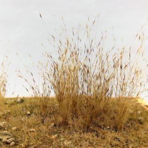 Effet herbe haute / basse, Graminées miniatures
