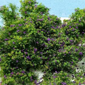 Végétation WarHammer-Green
