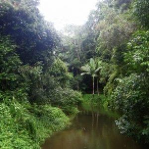 Vietnam - jungles et similaires Dioramas