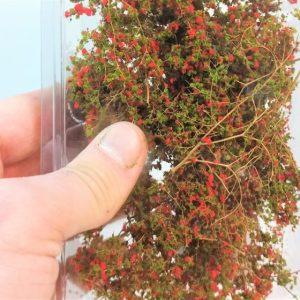 Arbustes, plantes, couronnes d'arbres