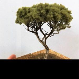 Oliviers - Palmiers - Pins - arbres en général