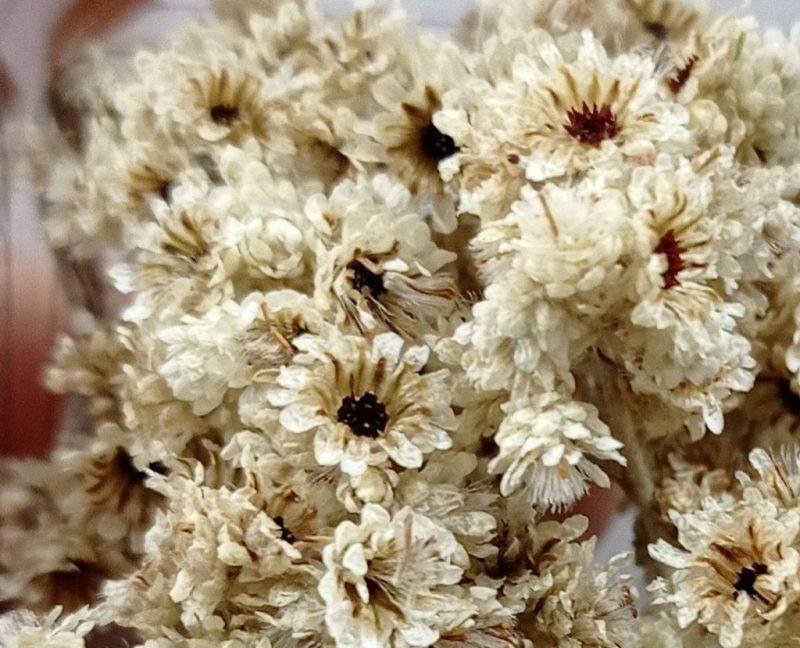 Fiore Manuel piccolo e molto particolare